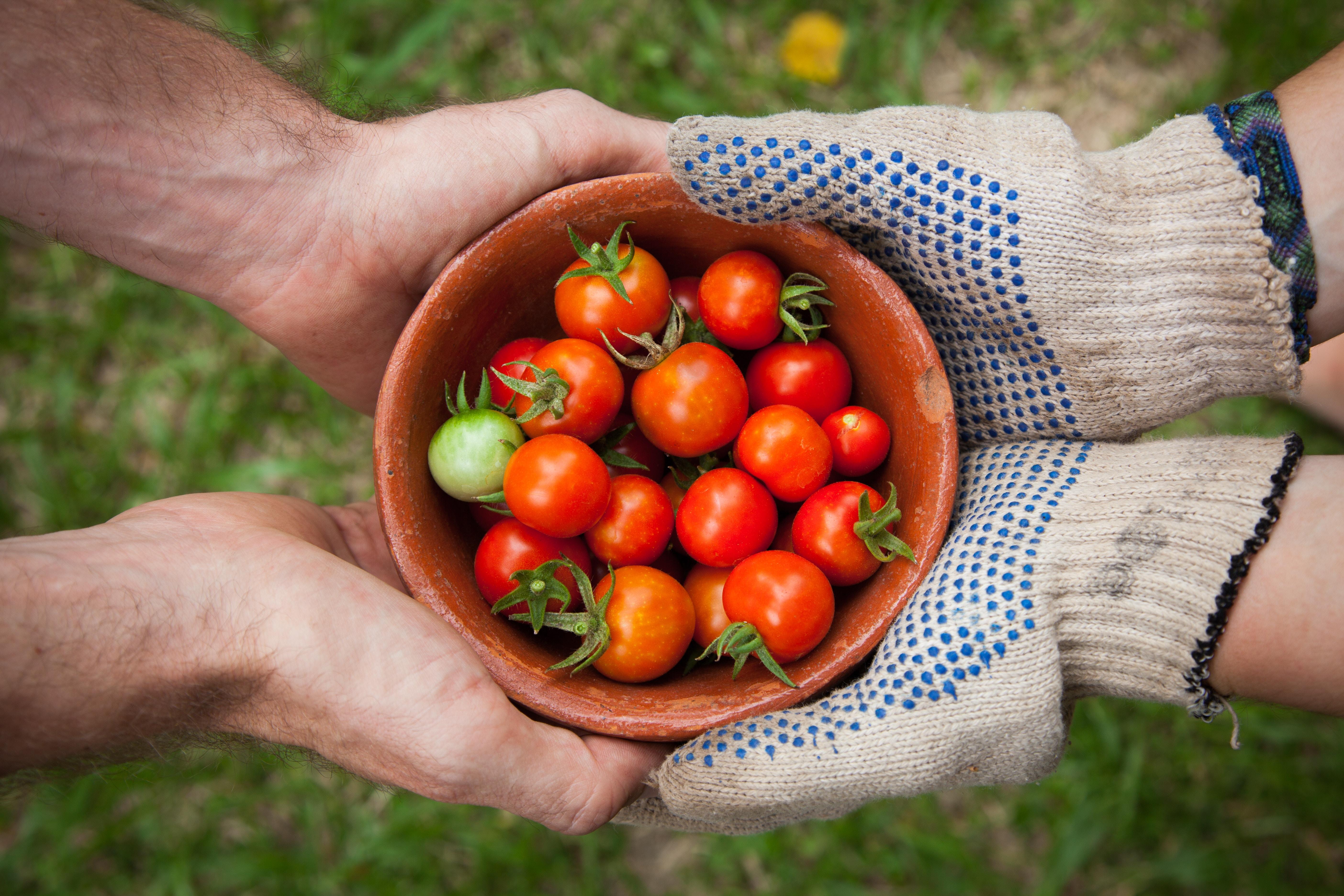 segurança alimentar - Como e por que gerenciar os novos Requisitos da Norma ISO 22000?