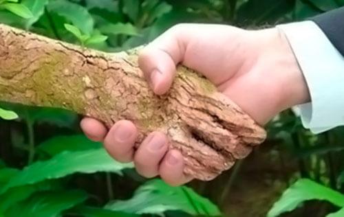 imagem de um mão de madeira apertando a mão de um homem - ISO 14001, Princípio da Prevenção. principios gerais de prevenção exemplos