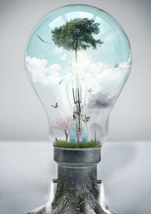 Responsabilidade pelo Dano ao Meio Ambiente