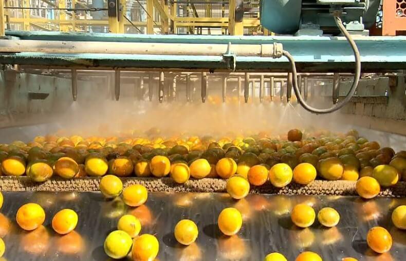 imagem de um fábrica de laranjas - ISO 22000 - Saúde e segurança de alimentos e Segurança Alimentar