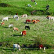 Brasil: reconhecido pela qualidade da carne bovina exportada
