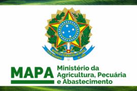 MAPA: novo modelo de relatório de auditoria