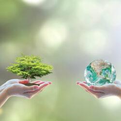 Equilíbrio ecológico